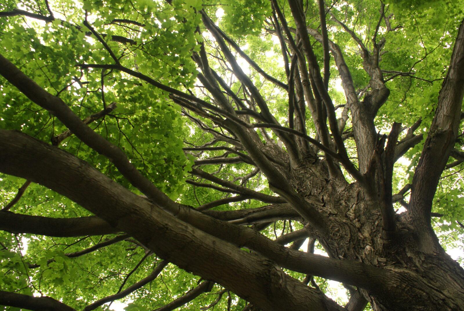 Trees of Ohio