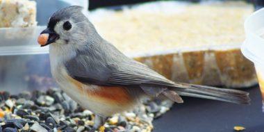 Bird Seed Sale
