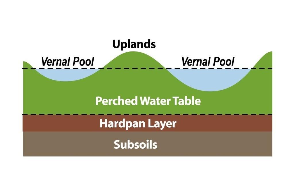 Vernal Pool