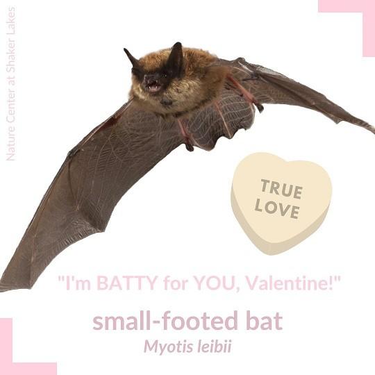 Bat Valentine
